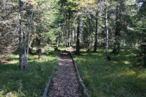 Sentier de la Tête du Lac, Le Sentier