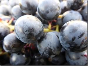 Wehrli Reb- und Weinbau