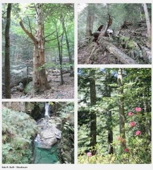Das Waldreservat des Onsernone