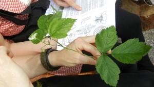 Angewandte Botanik 3 - © Sonja Wunderlin
