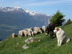Livestock guardian centre - © Naturpark Pfyn-Finges
