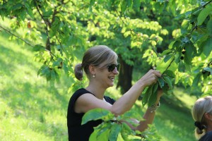 Aktiv-Tag Kirschenpflücken