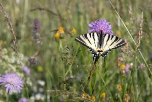 Bedrohte Insektenwelt - Umgang und Potentiale