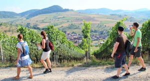 Jurapark-Weinwanderung 2019 - © Jurapark Aargau