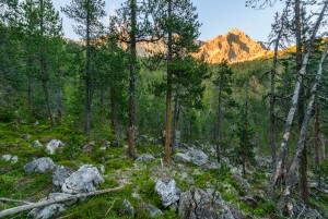 Naturwald La Niva