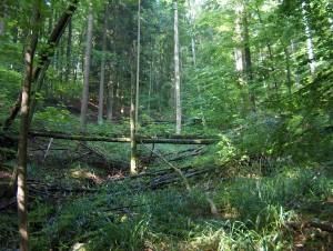 Albispass–Albishorn–Albispass - © Stiftung Wildnispark Zürich