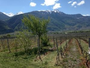 Biodiversité dans le vignoble - © Dr. Laura Bosco
