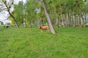 Viande de boeuf de Bière - © Parc Jura vaudois