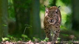 Schulbesuche WWF - © WWF