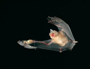 Fledermauskolonie Wegenstetten - © Dietmar Nill