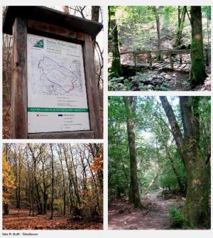 Der Waldpark Maia