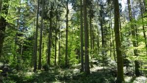 La forêt et l'homme