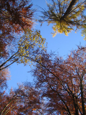 Wunderbare Bäume und Wälder voller Wunder - © Mo Güttinger