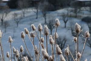 Naturgarten winterfit machen