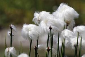 Botanische Exkursion: Nicht nur Wollgras!