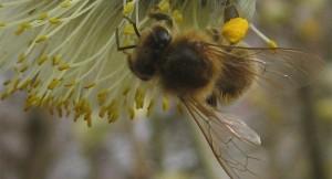 Mit den Bienen durchs Jahr - © B. Artmann, Oberflachs