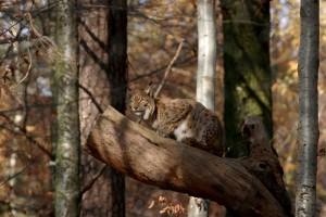 Escursione predatori - © Wildnispark Zürich