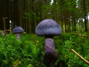Les champignons du Jorat