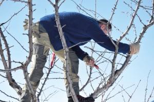 Hochstammobstbäume schneiden