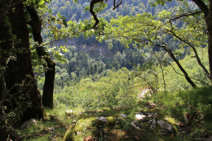 Waldwellness für die Frau