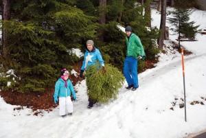 Weihnachtsbaum schlagen