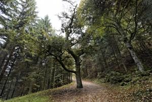 Via Surprise: Kraftorte-Tour - © Naturpark Thal