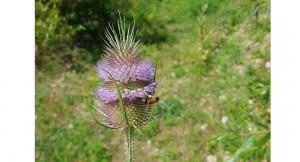 Naturgarten – kleine Tiere