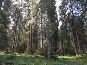 Die jurassischen Freiberge - © Parc du Doubs