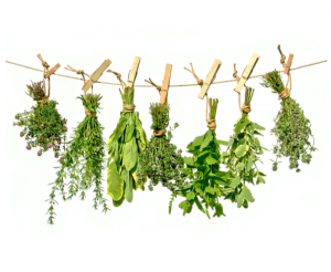 Heilpflanzen & Naturkosmetik