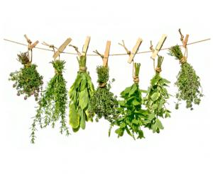Heilpflanzen & Naturkosmetik (Sek 2)