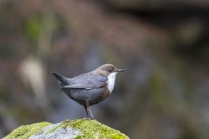 Les oiseaux du Rottensand - © Stefan Zurschmitten