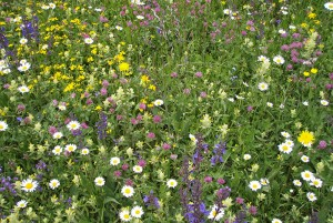 Alpenflora-Erlebnispfad - © Parc Ela