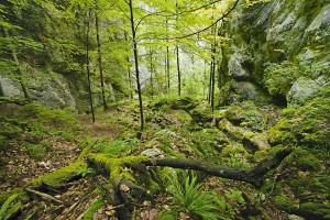 Wolfsschlucht-Herbetswil - © Schweiz Tourismus/Renato Bagattini