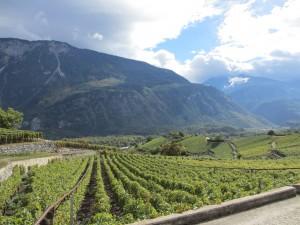 Wine trail - © Naturpark Pfyn-Finges