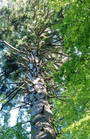 Baumpatenschaftswanderung