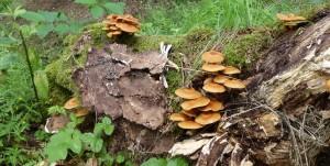 (Ur-)Wald erleben