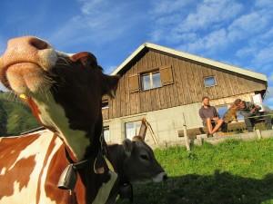 Erlebnis Alpwirtschaft