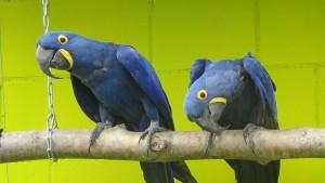 Führung im Vogelpark Ambigua