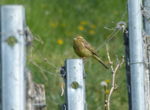 Vogelexkursion: Lebensraum Weinberg - © Luzia Zust