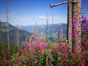 Jetzt buchen: Panoramabergwanderung Niesen-Diemtigtal
