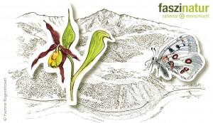 faszinaturExkursion Orchideen