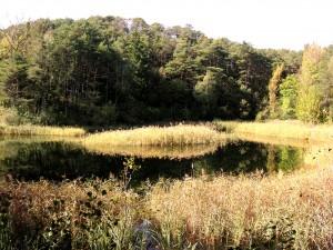 Rosensee - © Naturpark Pfyn-Finges
