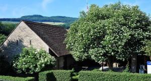 Heimatmuseum Schinznach-Dorf - ©
