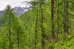 Naturwald Val Faller