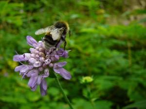 Insektentag