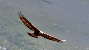 Aerie of the Golden eagle