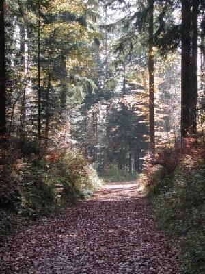 Sentier du Mont Chaubert