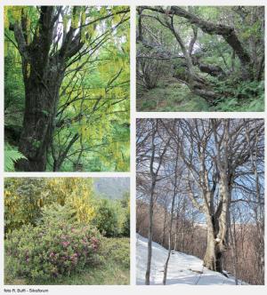 Der Heilige Wald von Mergugno