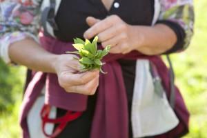 Essbare Pflanzen kennen lernen - © Djamila Agustoni - Progetto Parco Nazionale del Locarnese