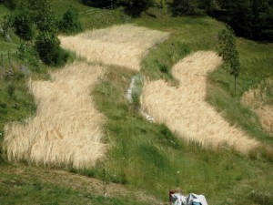 Wild herbs and rye